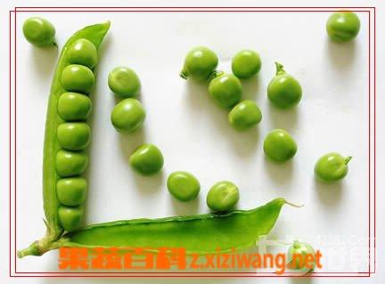 果蔬百科蚕豆
